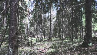 Audio: Metsäilta