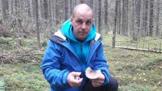 Audio: Sienten ihmeellinen maailma