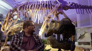 Audio: Linnut ovat dinosauruksia