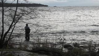 Audio: Kalakirjamies Ari Savikko
