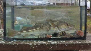 Audio: Miten otetaan hyvä kalavalokuva?