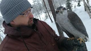 Audio: Markku Kallinen ei tarvitse pyssyä jänismetsälle, hänen salainen aseensa on kanahaukka nimeltä Lotta