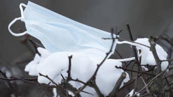 Kasvomaski lumisella puun oksalla.