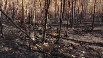 Metsäpalot piinaavat Karjalan tasavaltaa