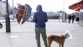 koira, mies ja ilmapallo