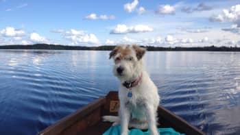 Koira istuu soutuveneessä.