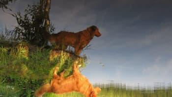 Koiran heijastus vedestä ylösalaisin