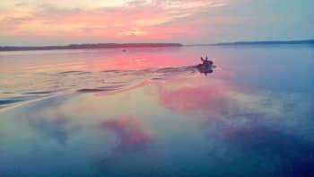 Hirvi uimassa järven yli