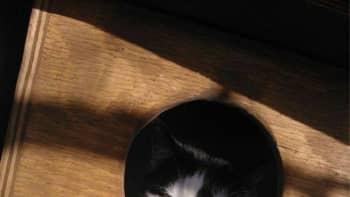 Kissa linnunpöntössä