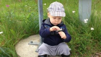 Poika nyppii lehtiä irti päivänkakkarasta