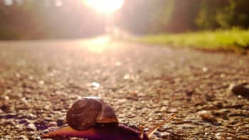 Etänä ylittämässä tietä