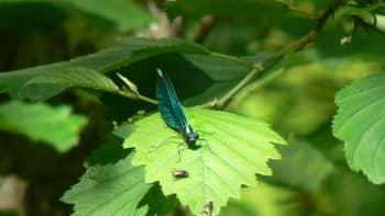 Hyönteisiä puunlehdellä