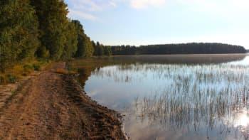 Järven rantaa Multialla