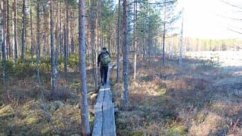 Heinäjoen luontoreitille rakennetaan viimeinen pitkospuuosuus Jokisaareen kesällä.