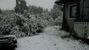 Lumi maassa Sallassa aamuyöllä 17.6.2014.