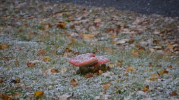 Sienet lumipeitteen alla