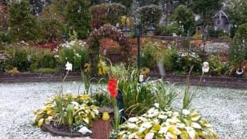 Kukat kukkivat lumisateessa.
