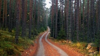 Hiekkatie metsässä