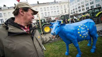 Mies ja sininen lehmäpatsas