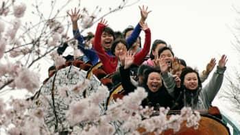 """Tokiossa kirsikkapuiden kukinta toi hanamin juhlijat paikalle Tokion puistoihin. Hanami tarkoittaa """"kukkien katselemista"""" ja se on vuoden tärkein juhla Japanissa."""