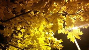 Katuvalo loistaa keltaisten vaahteranlehtien läpi.