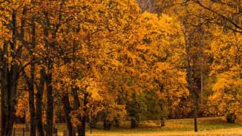 ruskan värittämiä puita