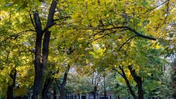 puita ja puiston penkkejä