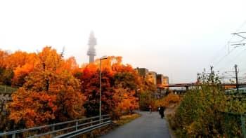 puita ja Ylen linkkitorni