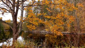 vettä ja puita