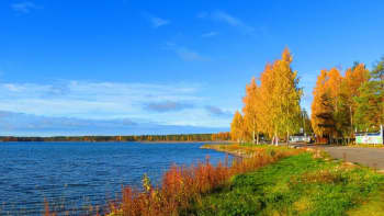ruskan värjäämiä puita ja järvi.
