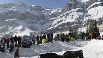Kaksi Heren-lehmää taistelevat Leukerbadissa Sveitsissä 12. maaliskuuta. Joka kevät järjestetään lehmien taisto, jossa valikoituu lauman johtaja.