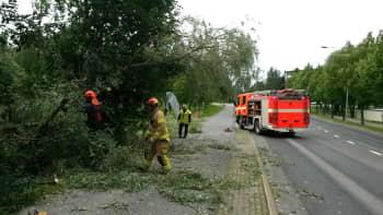 Palokuntaa raivaa kaatunutta puuta.
