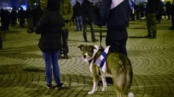 Koira mielenosoituksessa.