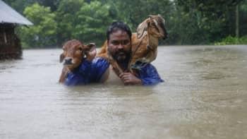 Mies siirsi kotieläimiään turvaan tulvilta Topan kylässä Nepalissa 12. elokuuta.