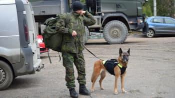 Pelastusharjoituksessa etsintöihin osallistuivat myös koirapartiot.