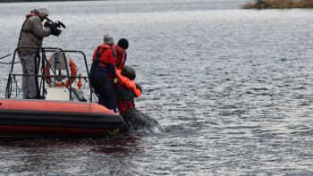 Heittoistuimella järveen päätynyt lentäjä pelastetaan Järvipelastajien veneeseen.