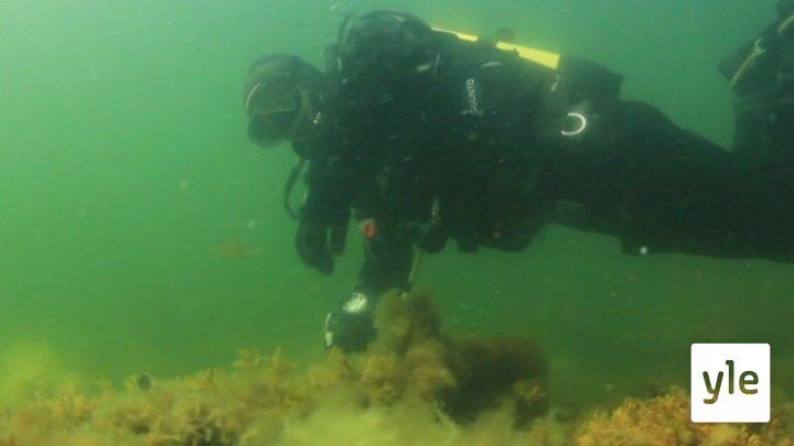 Itämeri pintaa syvemmältä: 22.03.2021 00.01