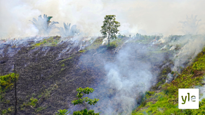 Koronakriisi kiihdytti sademetsän tuhoa Amazonissa