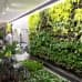 Huomenna laajentuvan espoolaisen kauppakeskus Ainoan viherseinät jatkavat Tapiolan puutarhakaupungin ideaa sisätiloissakin. Viherseinien suosio maailmanlaajuisesti on nyt vain niin suurta, että näihin viherseiniin on saatu odotettua pienempiä kasveja ja aluksi kasvien seasta pilkistää hieman myös mustaa taustaa.
