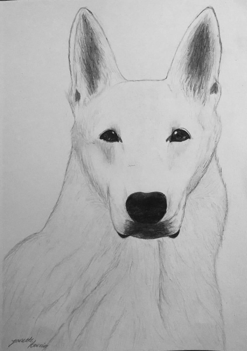 Janette Aarnion piirtämä koira