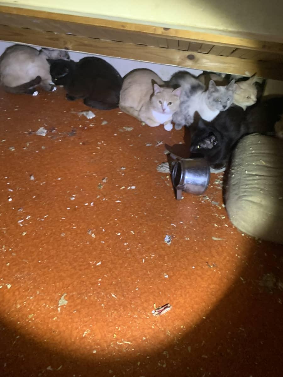 Kissoja rivissä seinänvieressä, sävngyn alla.