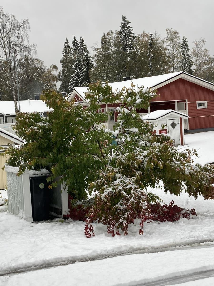Lumen painosta painunut puu.