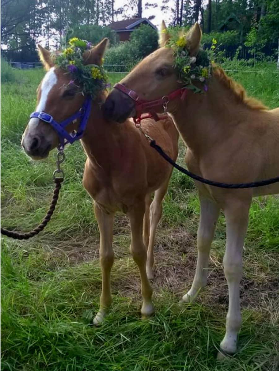 Kaksi hevosta seppeleet päässään.