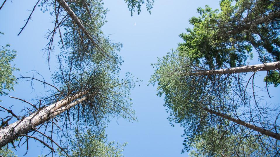 Puun latvoja.