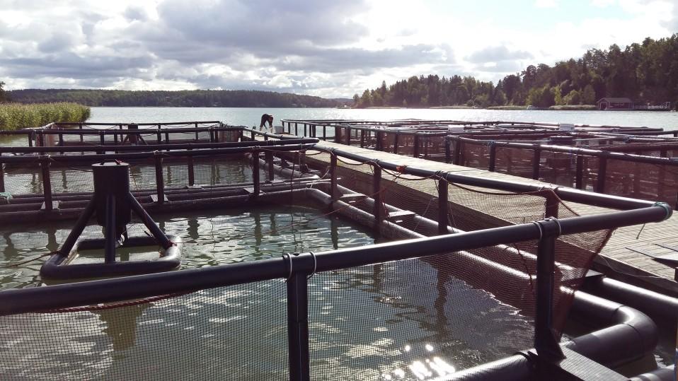Fiskodlingskassar vid Livias Fiskeri- och miljöinstitutet i Pargas.