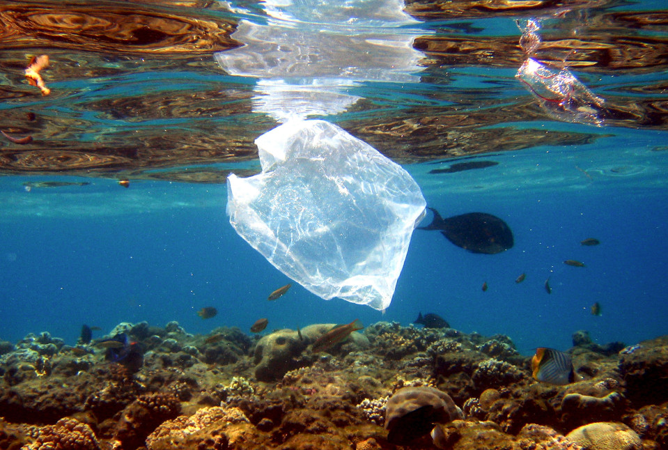 Tyhjä muovipussi pinnan alla meressä.