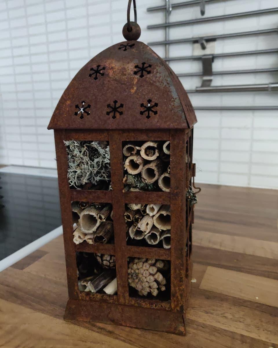 Vanhaan ruosteiseen lyhtyyn koottu hyönteishotelli